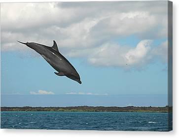 Dolphin Jump Canvas Print by Alan Lenk