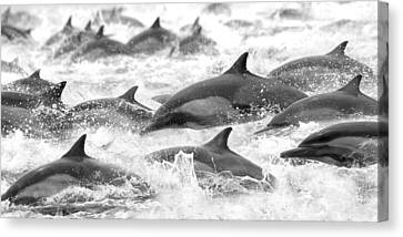 Dolphins On The Run Canvas Print by Steve Munch