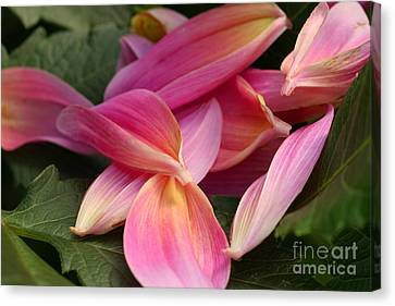 Done Blooming Canvas Print by Steve Augustin