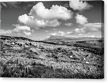 Donegal Scene    Canvas Print by Martina Fagan