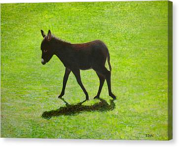 Donkey Foal Canvas Print by Eamon Doyle