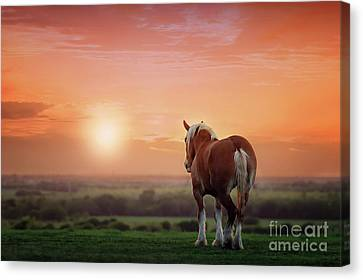 Don't Let The Sun Go Down On Me Canvas Print by Tamyra Ayles