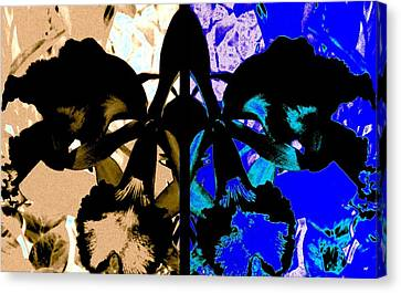 Double Black Orchid Canvas Print by Will Borden