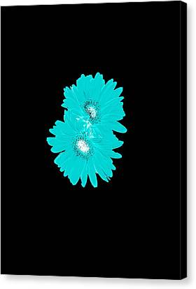 Clothing And Home Decor Design Double Turquoise Gerber Daisy Design Test Canvas Print by Heather Joyce Morrill