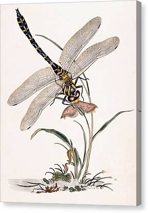Dragonfly Canvas Print by Edward Donovan