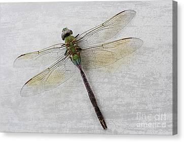 Dragonfly Canvas Print by Ella Kaye Dickey