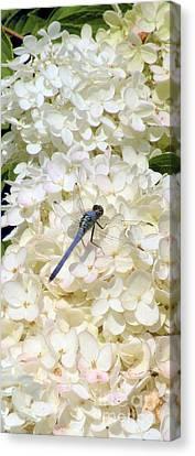 Dragonfly Falls Canvas Print by Kim Doran