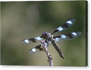 Dragonfly Hanging On  Canvas Print by Jeff Swan