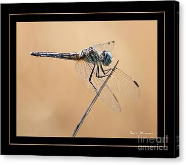 Dragonfly Needlepoint With Border Canvas Print by Carol Groenen