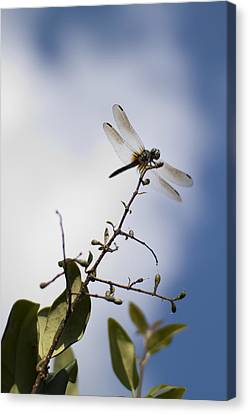 Dragonfly On A Limb Canvas Print by Dustin K Ryan
