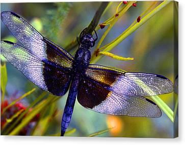 Dragonfly Canvas Print by Tony Ramos