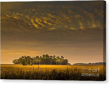 Dream Land Canvas Print by Marvin Spates