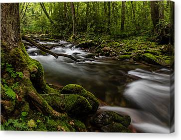 Dream Stream Canvas Print by Gary Migues