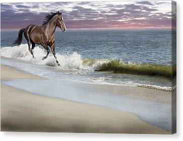 Dreamer On The Beach Canvas Print by Barbara Hymer