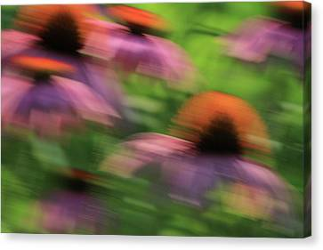 Dreaming Of Flowers Canvas Print by Karol Livote