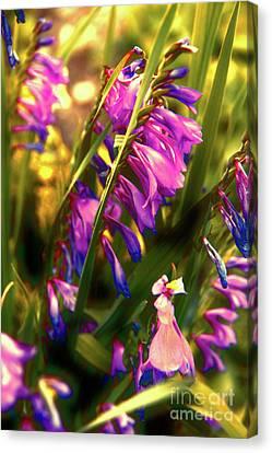 Dreamy Sunrise Canvas Print by Mariola Bitner