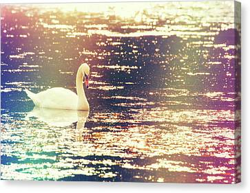 Dreamy Swan Canvas Print by Karol Livote
