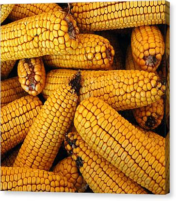 Dried Corn Cobs Canvas Print by LeeAnn McLaneGoetz McLaneGoetzStudioLLCcom