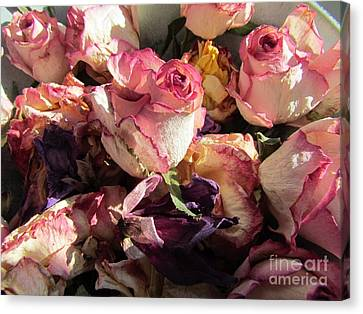 Driede Roses  Canvas Print by Joyce Woodhouse