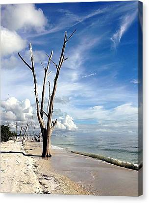 Driftwood At Lovers Key State Park Canvas Print by Janet King