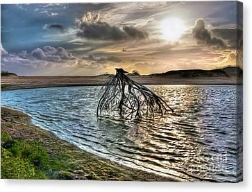 Driftwood In A Tide Pool Outer Banks Ap Canvas Print by Dan Carmichael
