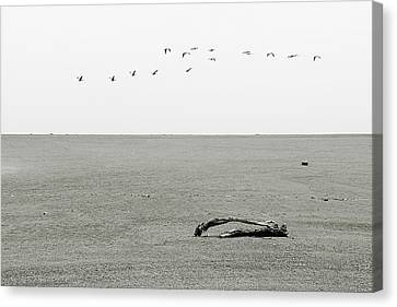 Driftwood Log And Birds - A Gray Day On The Beach Canvas Print by Christine Till