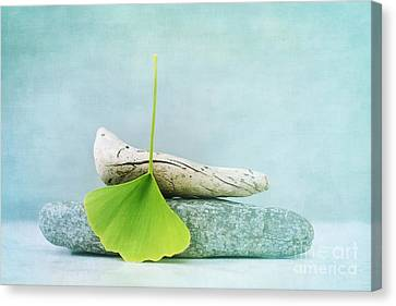 Driftwood Stones And A Gingko Leaf Canvas Print by Priska Wettstein