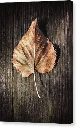 Dry Leaf On Wood Canvas Print by Scott Norris