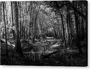 Drying Creek Bed Canvas Print by Marvin Spates
