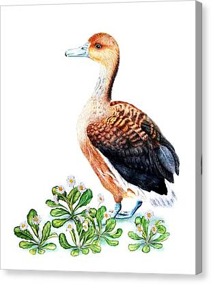 Duck And Daisies Canvas Print by Sandra Moore
