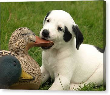 Duck Hunter Canvas Print by James Peterson