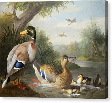 Ducks In A River Landscape Canvas Print by Jakob Bogdany