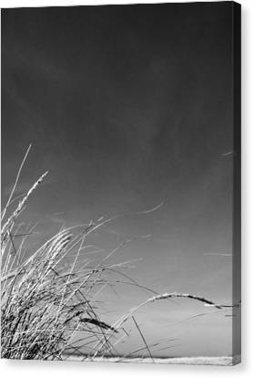 Dune Grass With Sky Canvas Print by Michelle Calkins