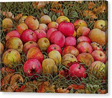 Durnitzhofer Apples Canvas Print by Ditz