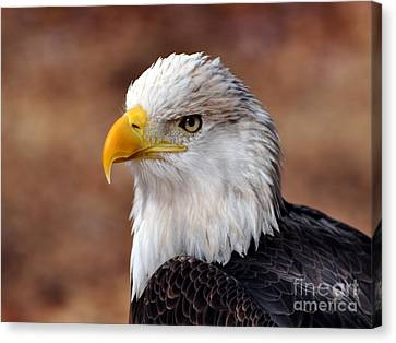 Eagle 25 Canvas Print by Marty Koch