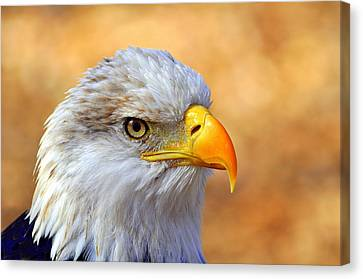 Eagle 7 Canvas Print by Marty Koch