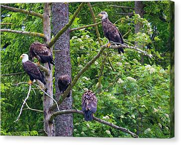 Eagle Tree Canvas Print by Mike  Dawson