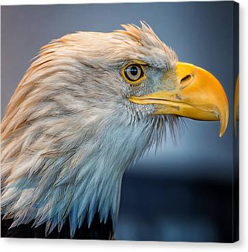 Eagle With An Attitude Canvas Print by Bill Tiepelman