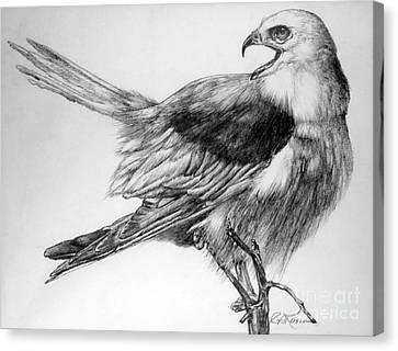 Eaglet Canvas Print by Roy Anthony Kaelin