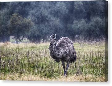 Early Morning Stroll Canvas Print by Douglas Barnard