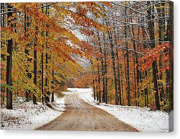 Early Snowfall In Manistee National Forest Canvas Print by Terri Gostola