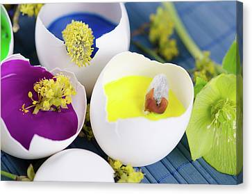 Egg Shells With Paints And Spring Flowers As A Easter Decoration Canvas Print by Dariya Angelova