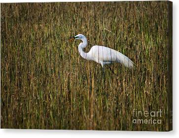 Egret In The Marsh Canvas Print by Angela Rath
