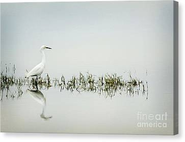 Egret Canvas Print by Jim  Calarese