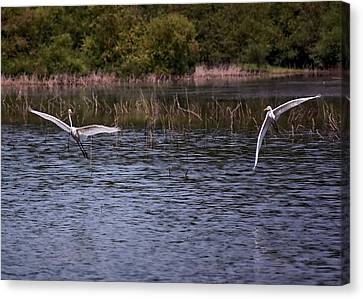 Egrets IIi Canvas Print by Gary Adkins