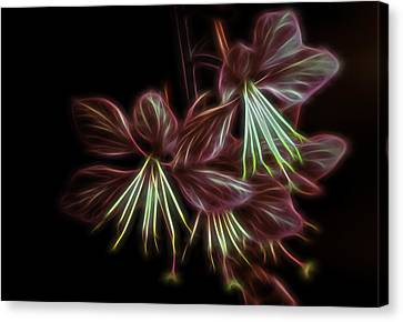 Electric Floral  Canvas Print by Debra Forand