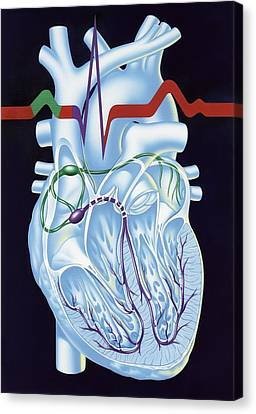 Electrical Conduction In The Heart, Artwork Canvas Print by John Bavosi