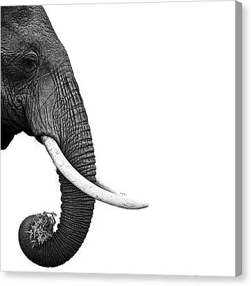 Elephant Canvas Print by Daniel Pupius