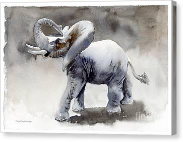 Elephant Light Study  Canvas Print by Amy Kirkpatrick