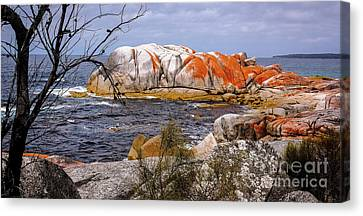 Elephant Rock - Bay Of Fires Canvas Print by Lexa Harpell